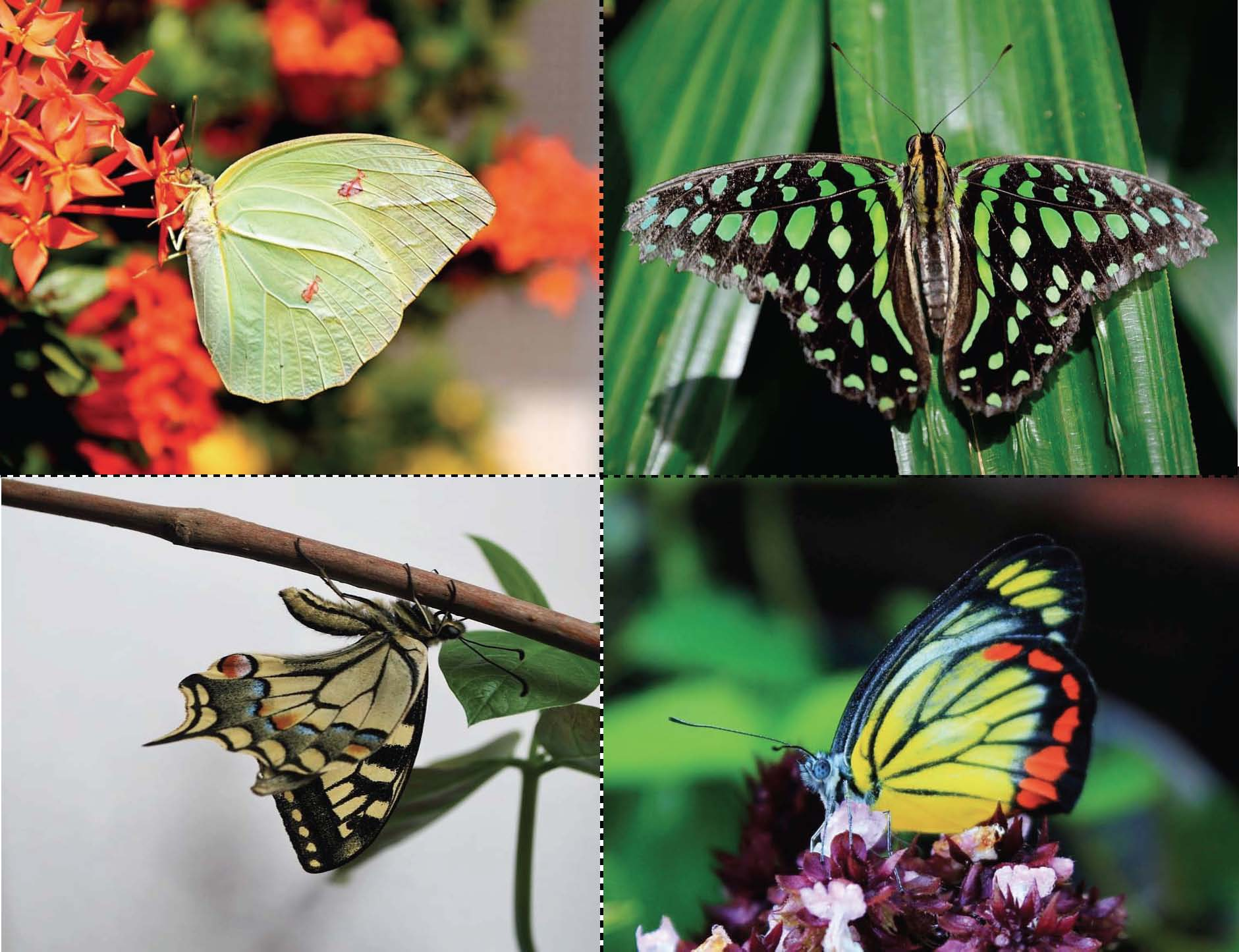 real photographs of a butterfly and caterpillar