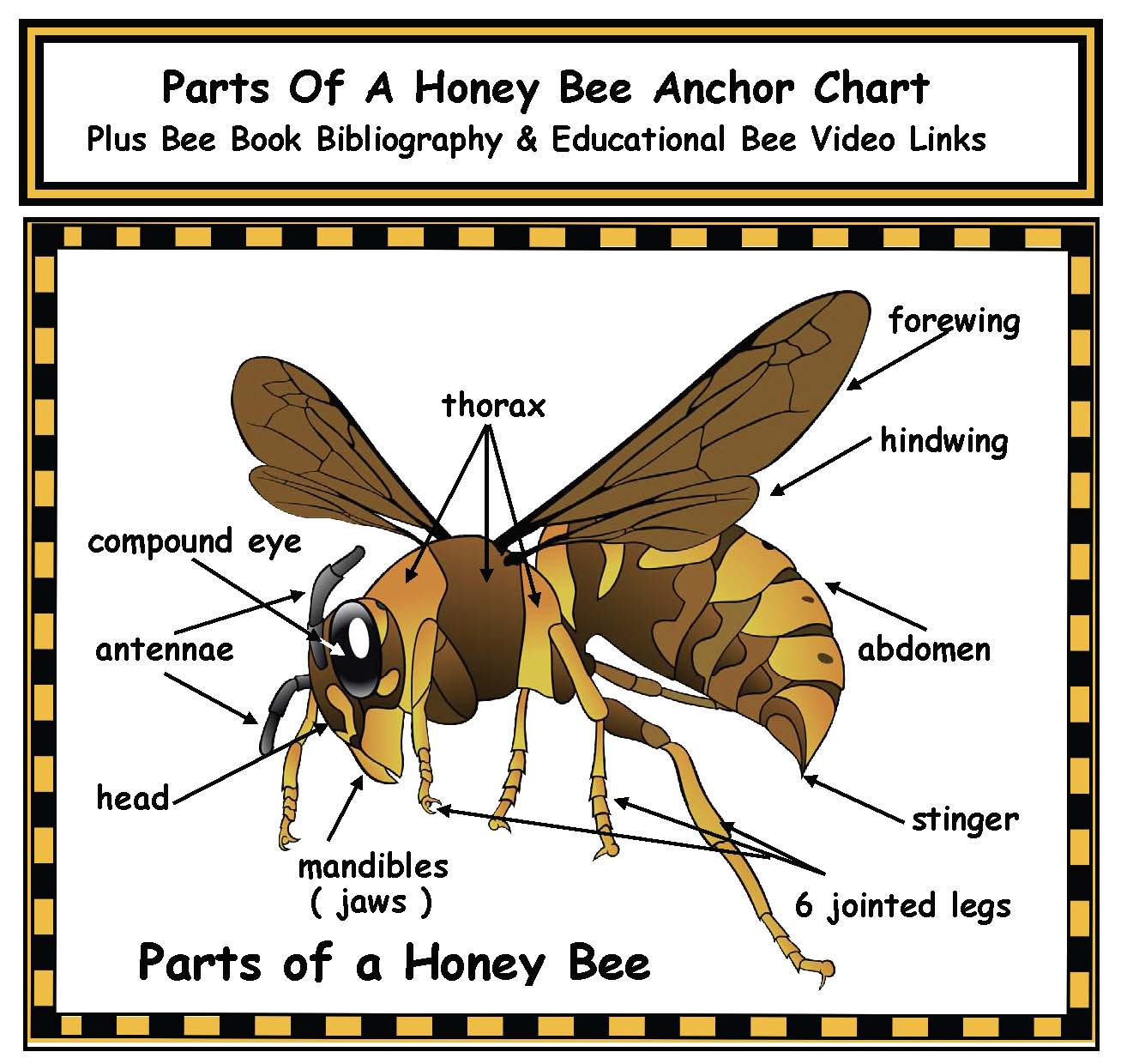 parts of a bee anchor chart poster, bee activities