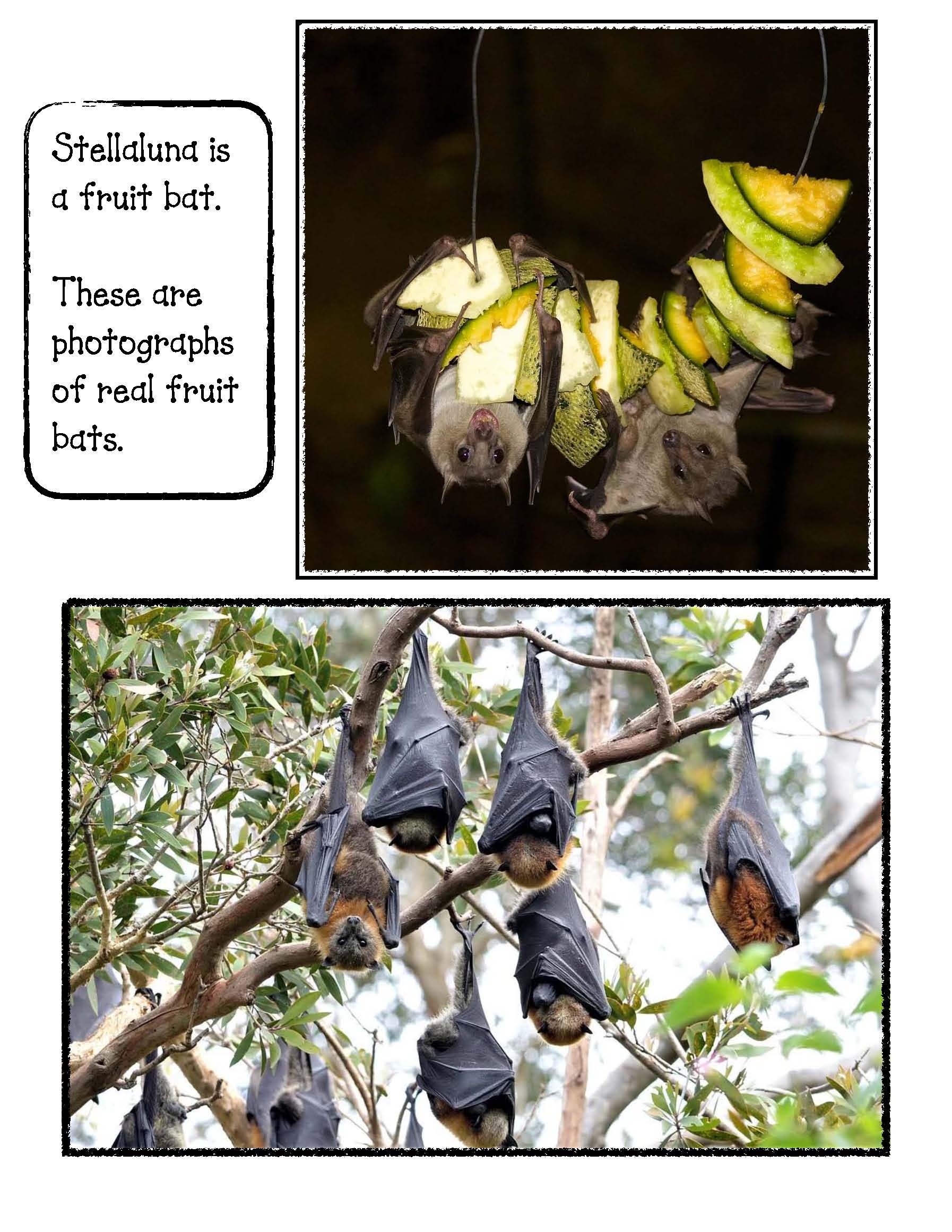 fruit bat photographs, Stellaluna activities, Venn diagram activities