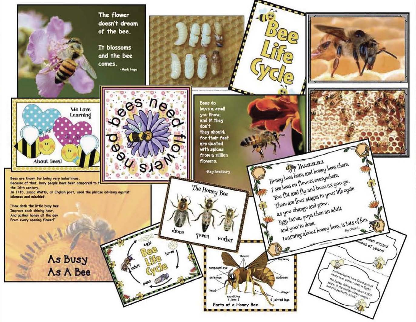 bee activities, bee games, bee crafts, math games, math centers, life cycle of a bee activities, bee themed word work, bee vocabulary, words that rhyme with bee, life cycle crafts, 50 interesting bee facts