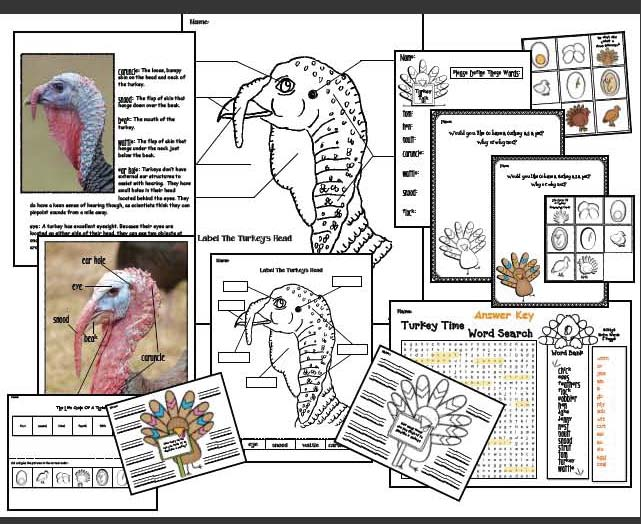 turkey activities, turkey crafts, photographs of real turkeys, parts of a turkey, turkey centers, life cycle of a turkey, turkey games, turkey bulletin boards, turkey writing prompts