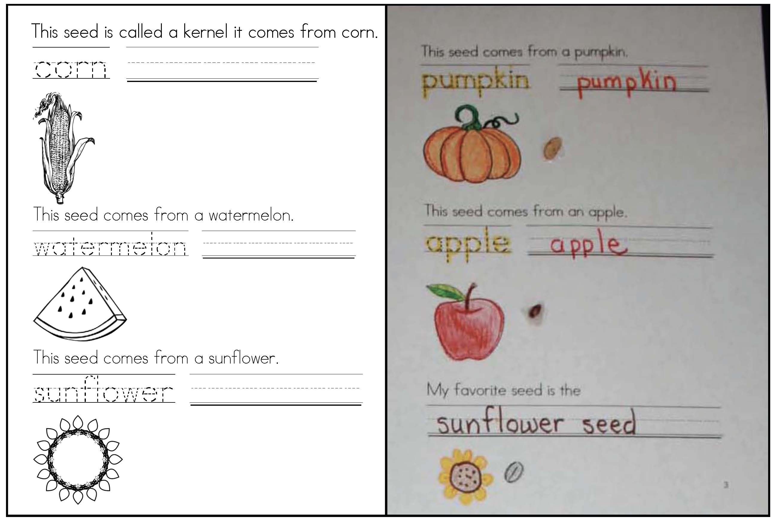 seed activities, pumpkin activities, apple activiies