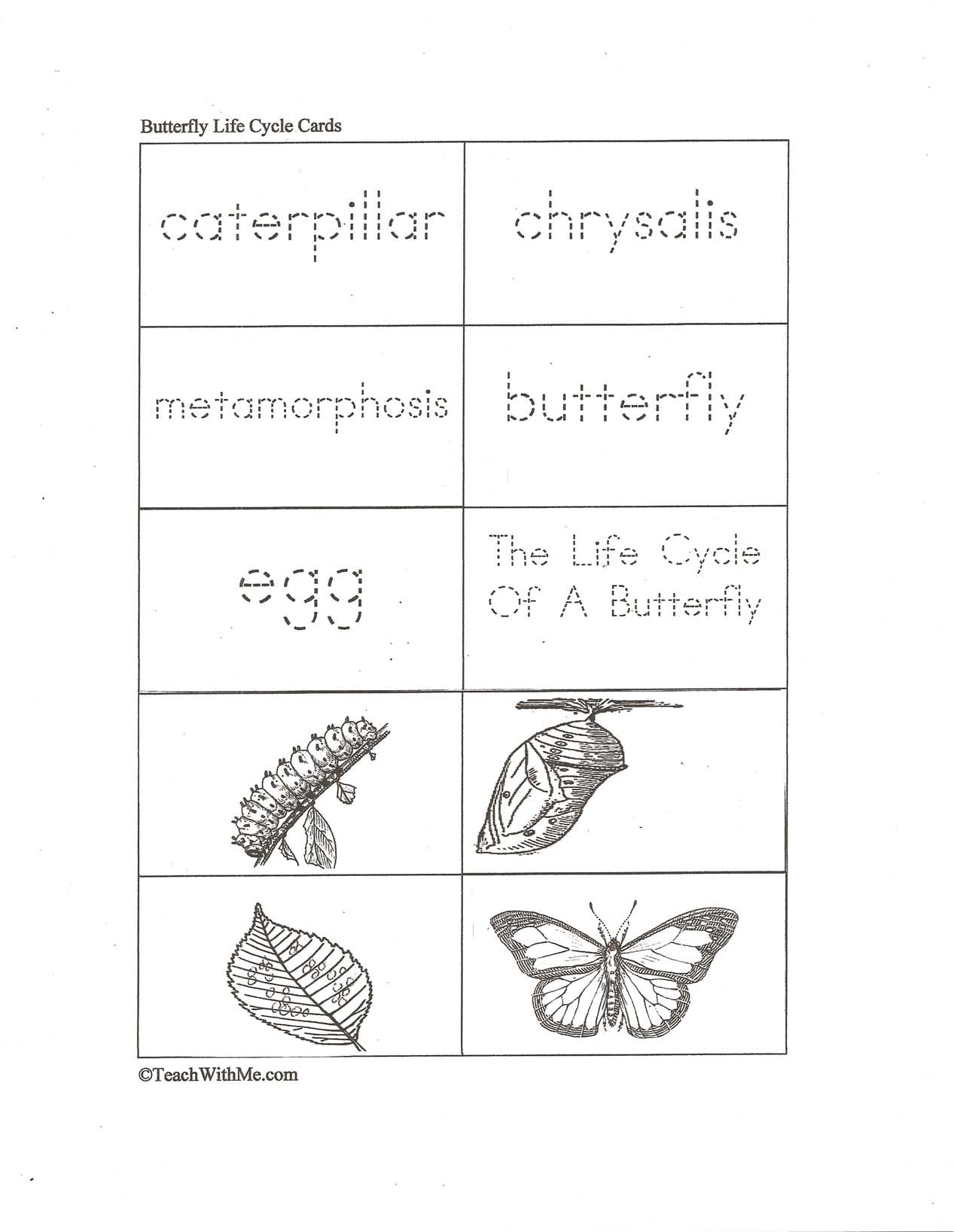 color booklet, color word flashcards, contraction activities, contraction worksheets,butterfly booklet, butterfly life cycle activities, butterfly life cycle booklet, butterfly life cycle posters, butterfly life cycle anchor chart, butterfly life cycle picture to label, butterfly activities, caterpillar activities, science activities, butterfly games, butterfly flashcards, butterfly lifecycle flashcards,